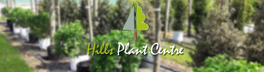 Hills Plant Centre
