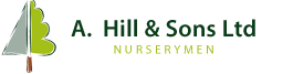 A Hill and Sons